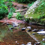 Shallow Creek Trail at Bell Smith Springs