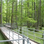 Elevated hiking trails at Heron Pond