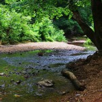 Hike the creek at Iron Furnace